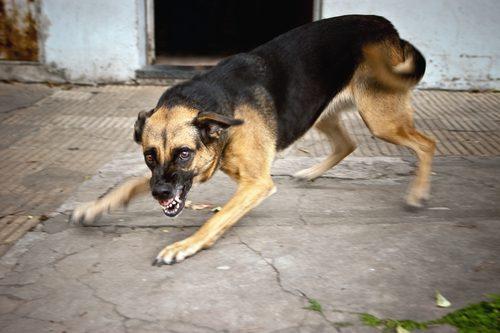 dog-bites-summer